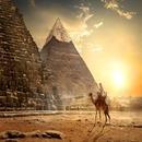 이집트 정복하기  이집트 완전일주TK 홍해 자유일정+알렉산드리아 관광