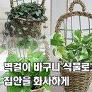 가꾸지오 공기정화식물 벽걸이 바구니화분 포트식물