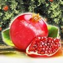 석류 1박스(7-13과)/냉동석류2kg 석류즙21포 선택